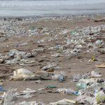 Weniger Bio – mehr Plastik